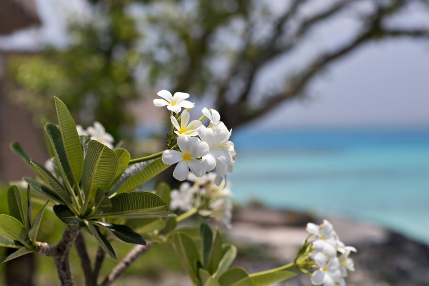 Cheval Blanc Randheli Luxury Resort - Noonu Atoll, Maldives - Tropical Flowers