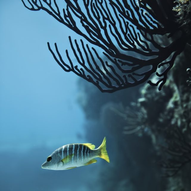 Amanyara Luxury Resort - Providenciales, Turks and Caicos Islands - Tropical Fish