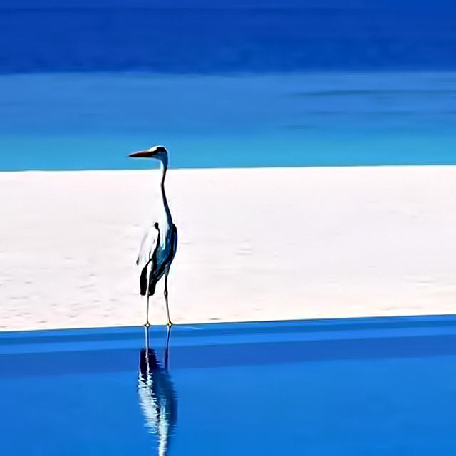Velassaru Maldives Luxury Resort - South Male Atoll, Maldives - Bird on Beach
