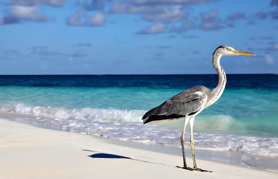 Velassaru Maldives Luxury Resort - South Male Atoll, Maldives - Tropical Bird