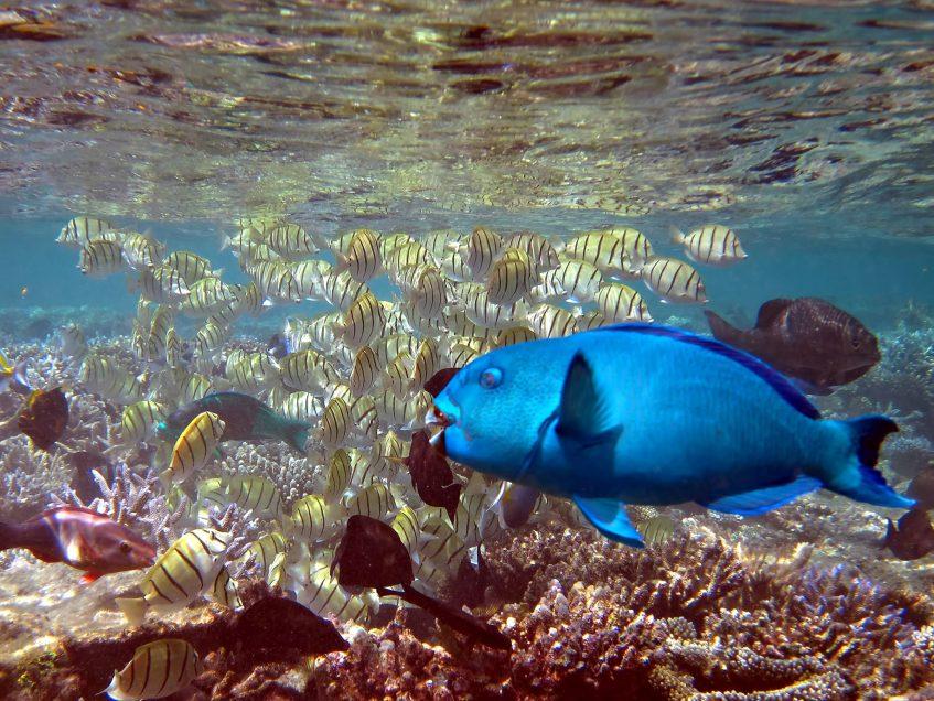 W Maldives Luxury Resort - Fesdu Island, Maldives - Tropical Ocean Fish
