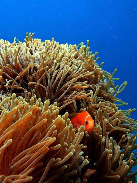 W Maldives Luxury Resort - Fesdu Island, Maldives - Tropical Ocean Orange Fish