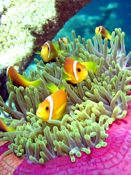 W Maldives Luxury Resort - Fesdu Island, Maldives - Tropical Ocean Yellow Fish