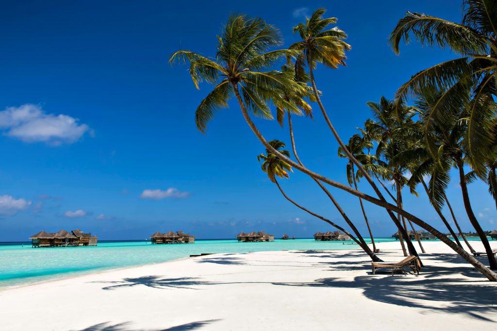 Gili Lankanfushi Luxury Resort - North Male Atoll, Maldives - White Sand Beach Palm Trees