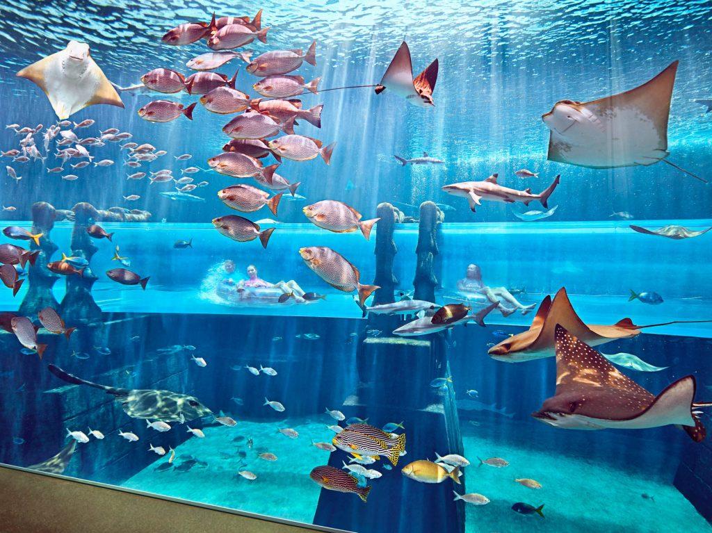 Atlantis The Palm Luxury Resort - Crescent Rd, Dubai, UAE - Shark Attack Underwater Slide