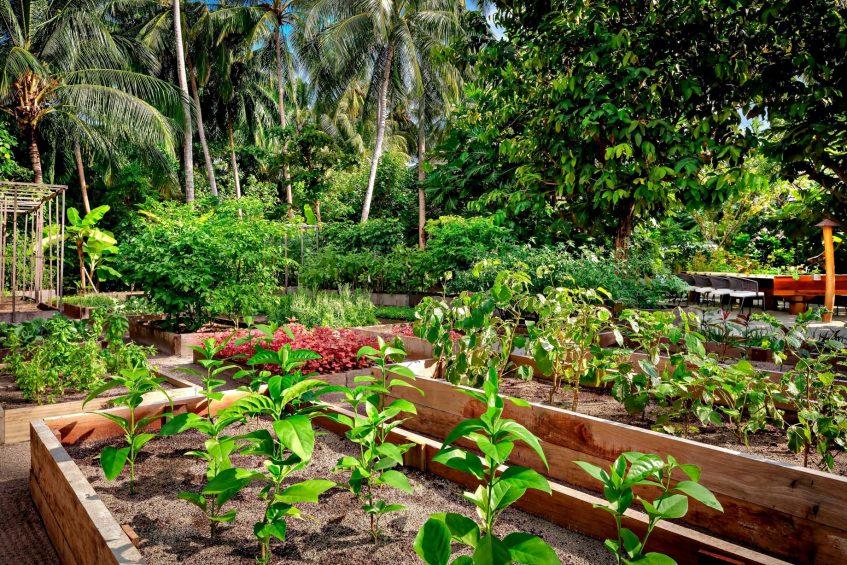 The St. Regis Maldives Vommuli Luxury Resort - Dhaalu Atoll, Maldives - Herb Vegetable Garden