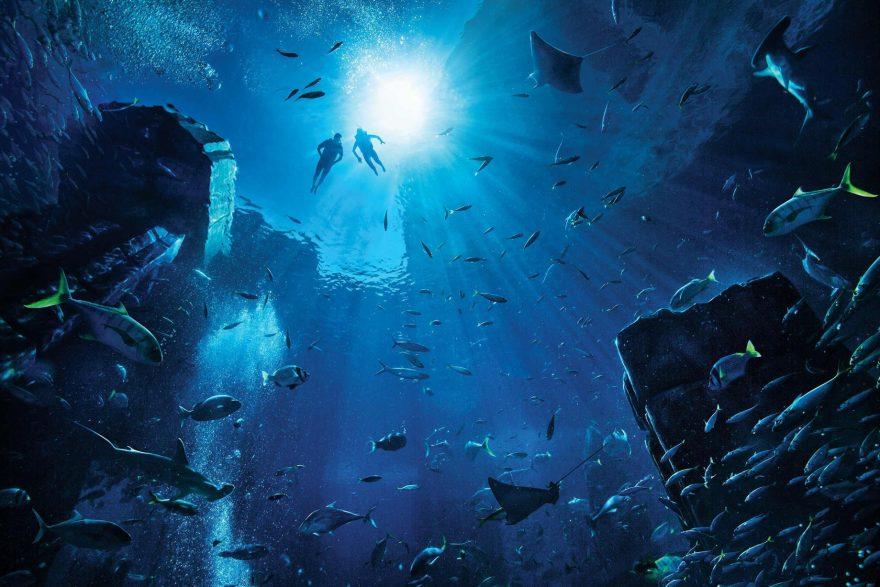 Atlantis The Palm Luxury Resort - Crescent Rd, Dubai, UAE - Ambassador Lagoon Underwater