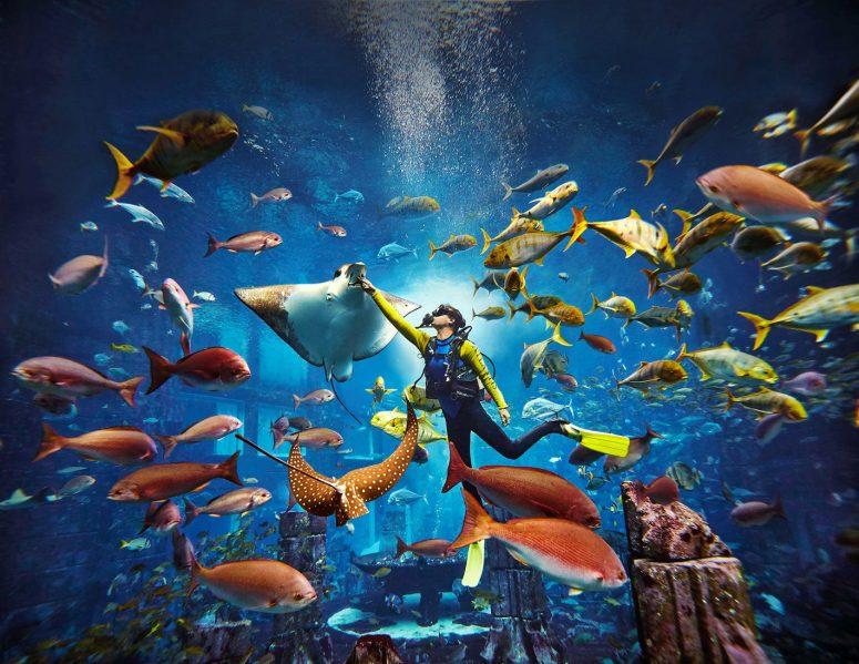Atlantis The Palm Luxury Resort - Crescent Rd, Dubai, UAE - Predator Dive Adventure