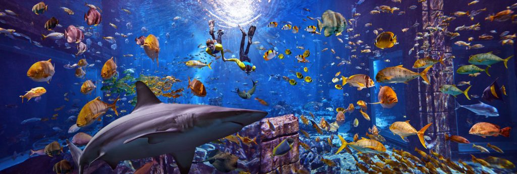 Atlantis The Palm Luxury Resort - Crescent Rd, Dubai, UAE - Underwater Snorkelling Adventure