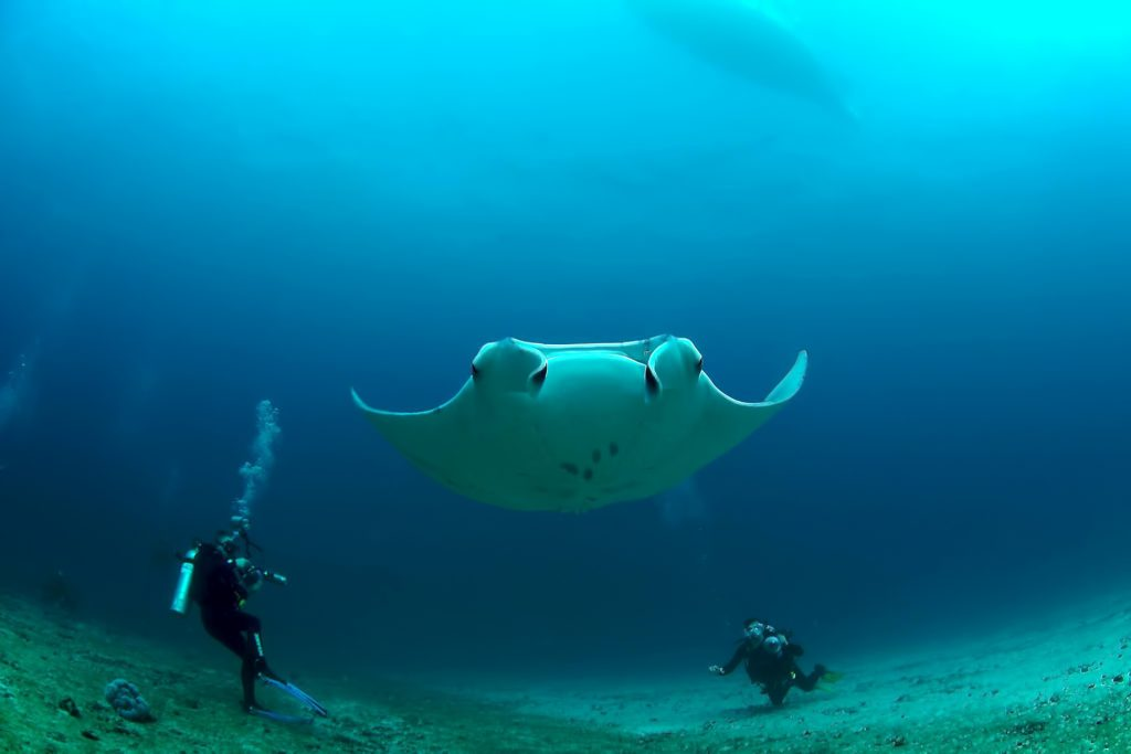 Cheval Blanc Randheli Luxury Resort - Noonu Atoll, Maldives - Manta Ray Divers