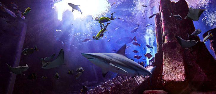 Atlantis The Palm Luxury Resort - Crescent Rd, Dubai, UAE - Underwater Snorkelling