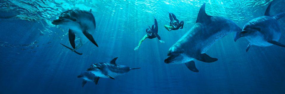 Atlantis The Palm Luxury Resort - Crescent Rd, Dubai, UAE - Underwater Dolphin Snorkel