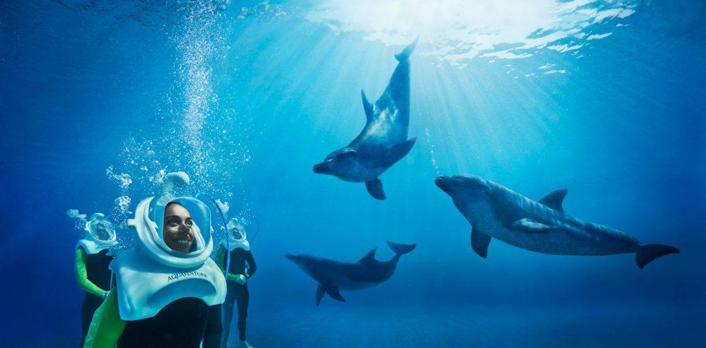 Atlantis The Palm Luxury Resort - Crescent Rd, Dubai, UAE - Underwater Dolphin Trek