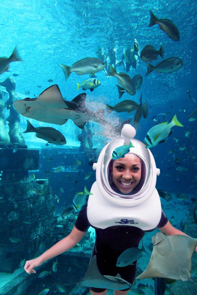 Atlantis The Palm Luxury Resort - Crescent Rd, Dubai, UAE - Aquaventure Water Park Aquatrek Xtreme