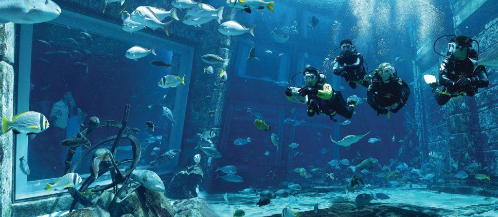 Atlantis The Palm Luxury Resort - Crescent Rd, Dubai, UAE - Dive Discovery