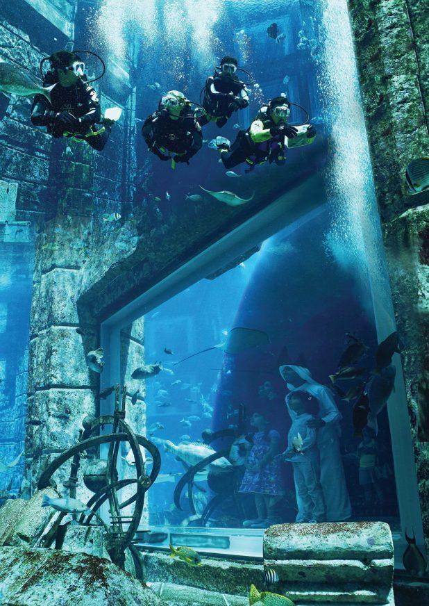 Atlantis The Palm Luxury Resort - Crescent Rd, Dubai, UAE - Dive Discovery. Underwater Viewing Area