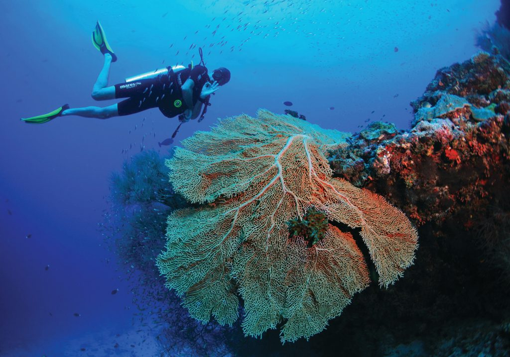 Amilla Fushi Luxury Resort and Residences - Baa Atoll, Maldives - Underwater Scuba Diving