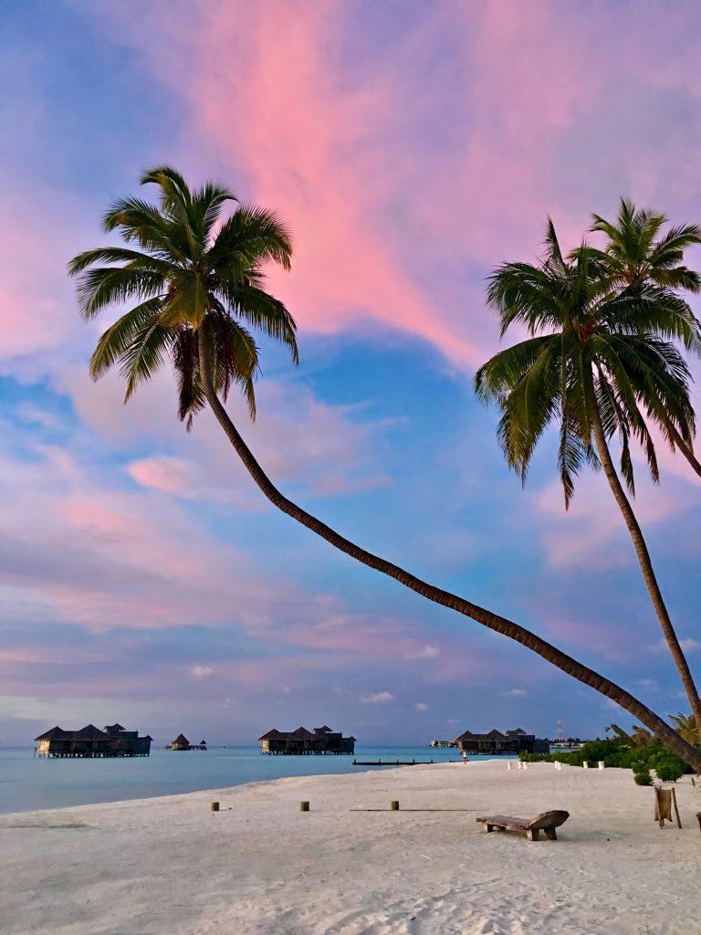 Gili Lankanfushi Luxury Resort - North Male Atoll, Maldives - Beach Palm Tree Sunset