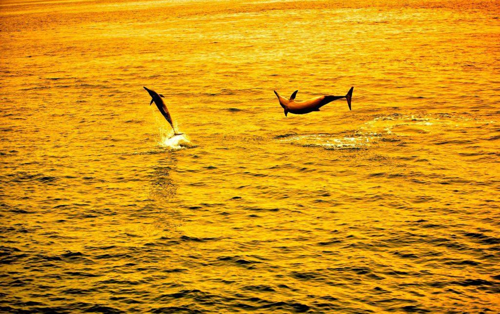 Gili Lankanfushi Luxury Resort - North Male Atoll, Maldives - Dolphins Sunset