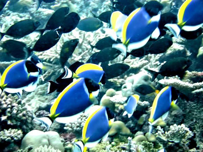 Velassaru Maldives Luxury Resort - South Male Atoll, Maldives - Underwater Fish