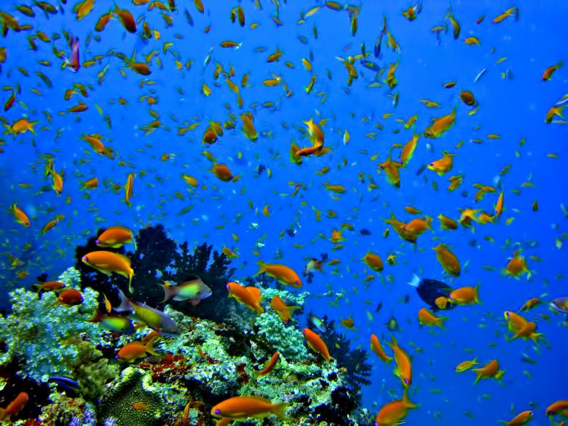 Velassaru Maldives Luxury Resort - South Male Atoll, Maldives - Tropical Fish