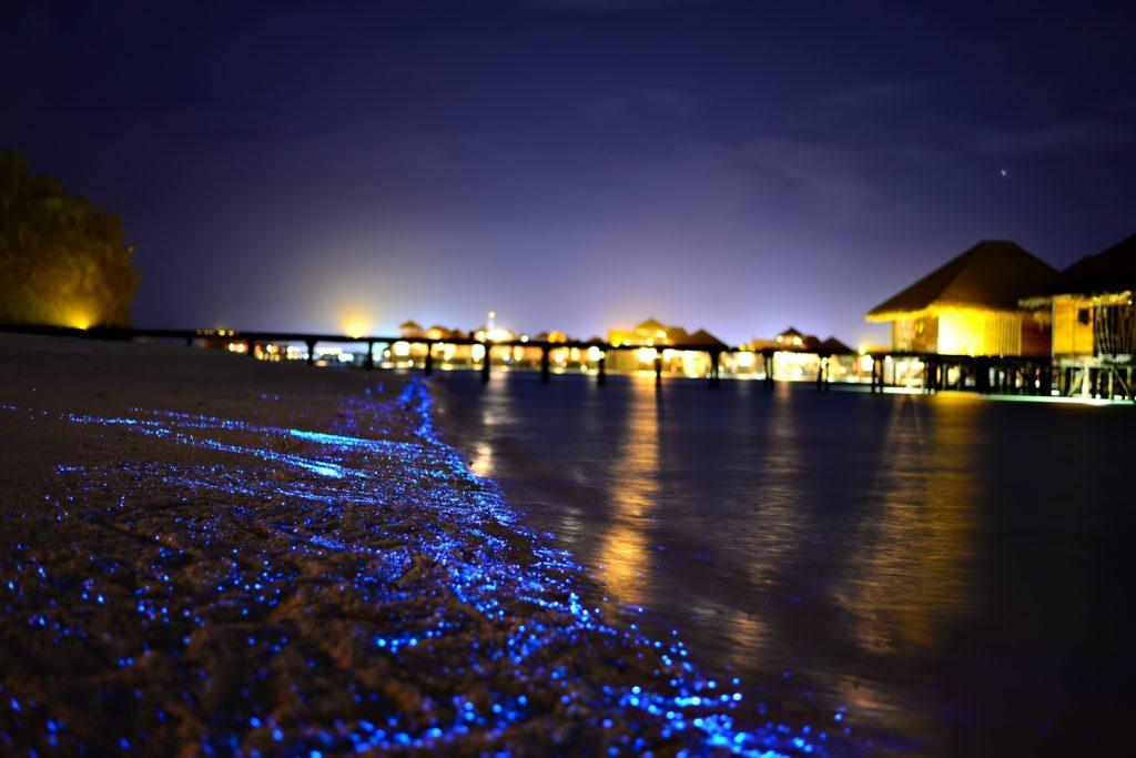 Gili Lankanfushi Luxury Resort - North Male Atoll, Maldives - Bioluminescent Beach Night View