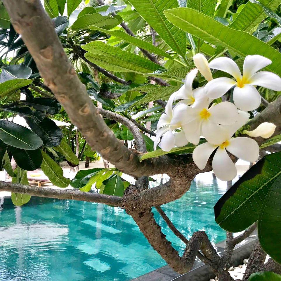 Cheval Blanc Randheli Luxury Resort - Noonu Atoll, Maldives - Poolside Tropical Flowers