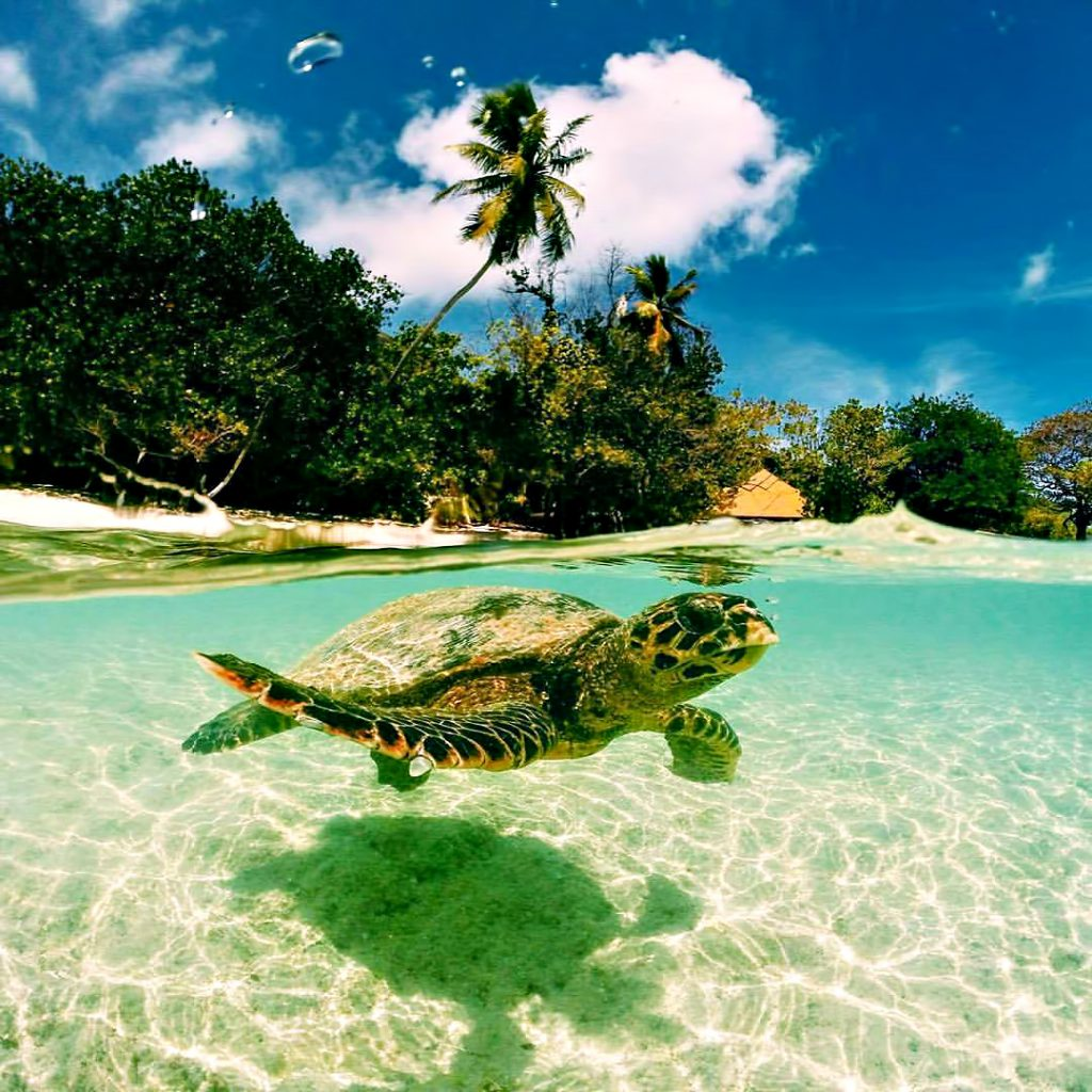 Six Senses Zil Pasyon Luxury Resort - Felicite Island, Seychelles - Island View Turtle