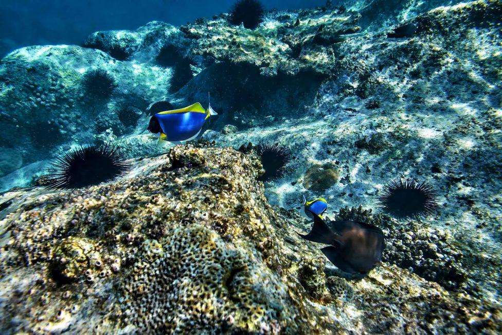 Six Senses Zil Pasyon Luxury Resort - Felicite Island, Seychelles - Tropical Fish Underwater