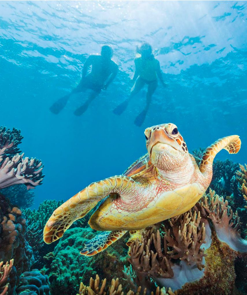 InterContinental Hayman Island Resort - Whitsunday Islands, Australia - Sea Turtle